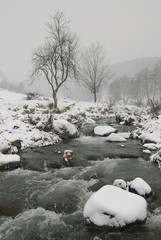 Icy river #3