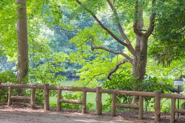 Promenade at Inokasira park