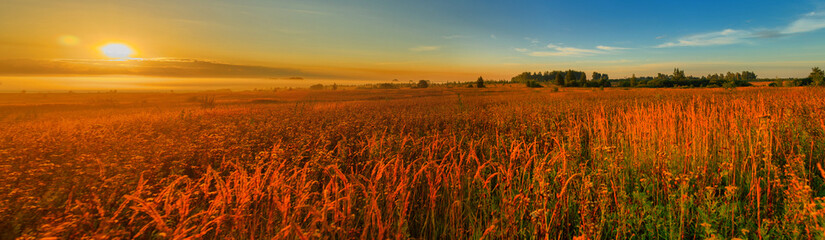 Sunrise over the meadow, panorama