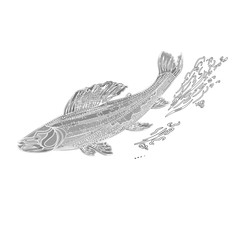 Trout salmonidae vintage engraved black vector