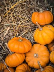 Thanksgiving pumpkins background