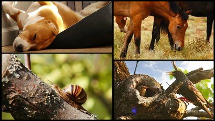 Sleeping beagle, hoses,snail and starling family collage footage