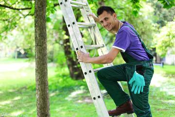 junger Gärtner steigt auf Leiter