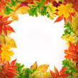 Multi-colored autumn leaves with highlights, natural background