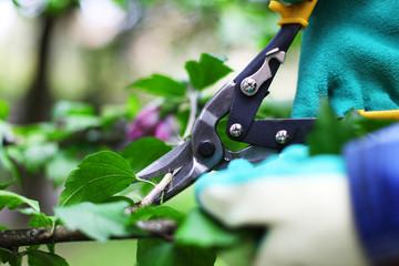 Gartenschere in Aktion