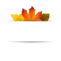 Herbstblätter - Banner