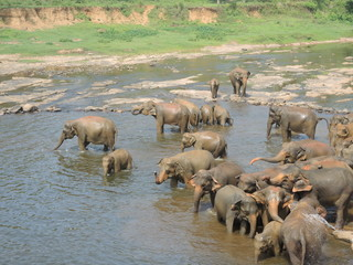 Elephants on the river
