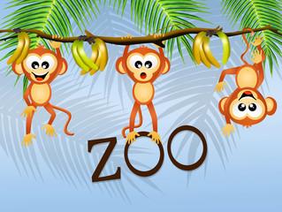 monkeys in the zoo