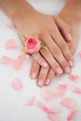 Womans hands with pink rose petals