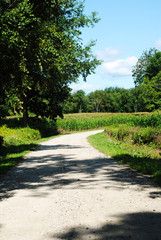 Dirt Road in a Peaceful Country Scene