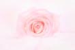 Obrazy na płótnie, fototapety, zdjęcia, fotoobrazy drukowane : Petals of  rose