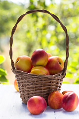 Basket of ripe fruit nectarines