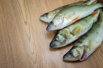 Perch fishes