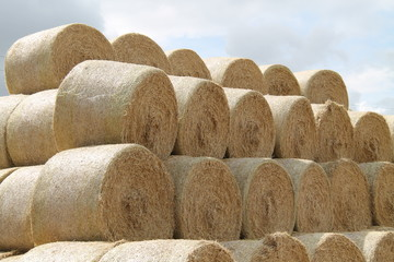 A Stack of Recently Harvested Round Straw Bales.
