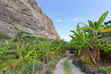 Banana plantation along the coast of Madeira Island, Portugal