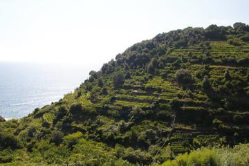 Vineyards at Italy