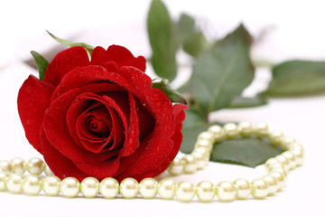 Red rose and white pearls
