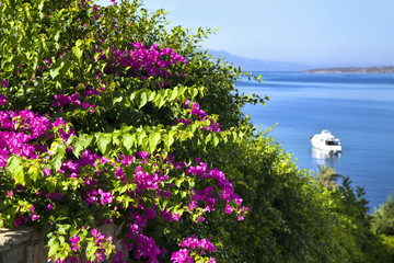 Bougainvillea and sea view from beautiful tourism city Bodrum