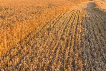 Summer landscape with farm fields