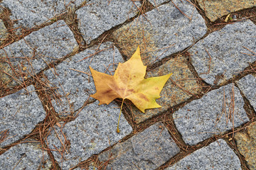 yellow leaf on street with cobblestones