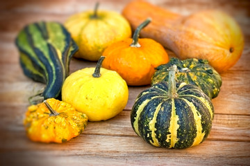 Pumpkin, squash, gourd - autumn harvest
