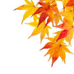 buntes Herbstlaub vor weißem Hintergrund