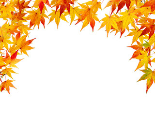 Bunte Herbstblätter als Hintergrund