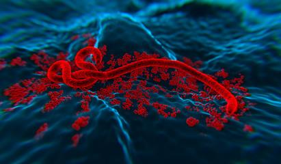 Ebola wirus 3