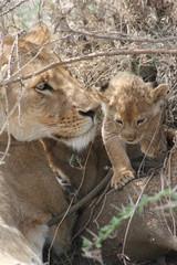 león2