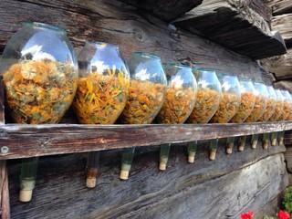fiori secchi in bottiglia