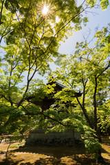 gazebo in Japanese garden, Kyoto, Japan