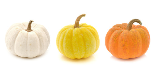 Fresh yellow pumpkin,white pumpkin and orange pumpkin isolated o