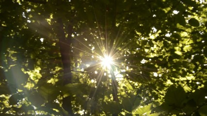 Camera zoom in to bright sun shining on summer day in forest.