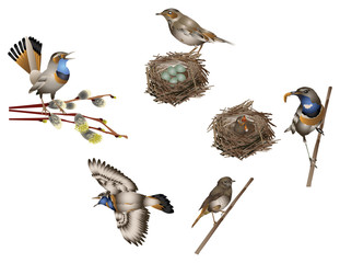 Life of bird