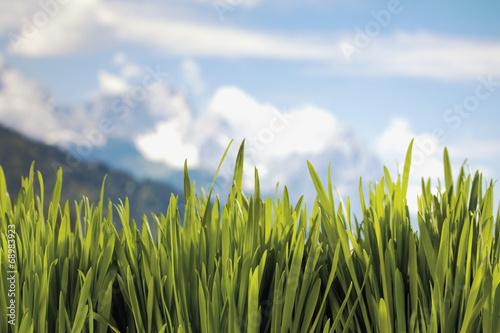 canvas print picture Gras auf blauem Hintergrund