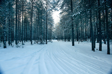 magical winter forest, a fairy tale, mystery