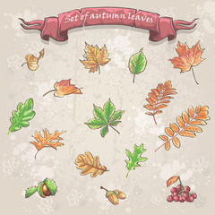 Set of autumn leaves, viburnum berries, chestnuts and acorns