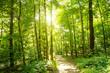 Leinwandbild Motiv Einladung zum Träumen: Wald mit Morgensonne :)
