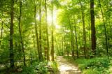 Fototapeta Głęboki las w promieniach słońca