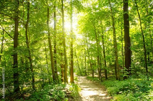 Fotobehang Bossen Einladung zum Träumen: Wald mit Morgensonne :)