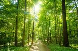 Fototapeta Wald mit Morgensonne :)