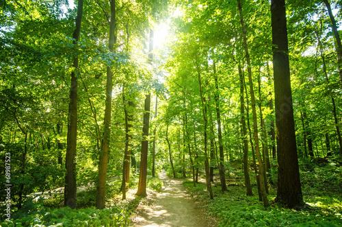 Leinwanddruck Bild Wald mit Morgensonne :)