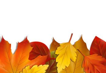 Gemischte Herbstblätter