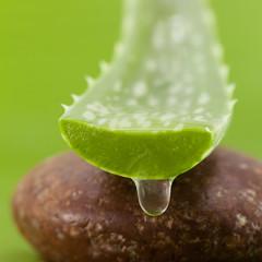 Fresh aloe leaf with water drop .