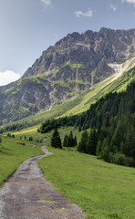 Almweg im Tal