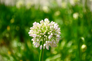 white flower on a green background