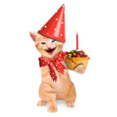 Katze / Kätzchen Geburtstag isoliert