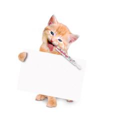 kranke Katze mit Eisbeutel und Fieberthermometer isoliert