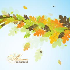 Oak autumn background, vector