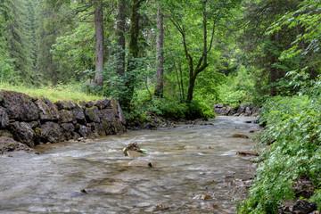 Gebirgsbach im Wald